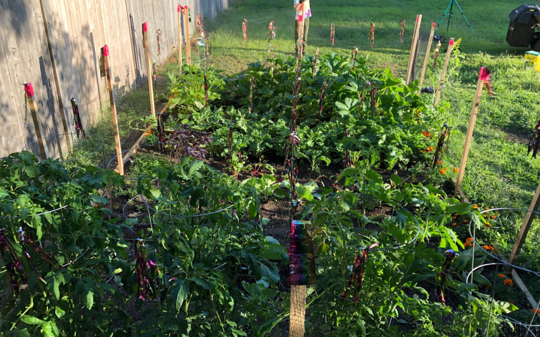 Alert: Bring your Garden Produce to the Plymouth Food Pantry!